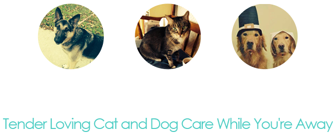 Cat And Dog Care